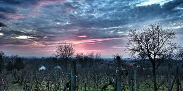 Országos Fotópályázat a borról, (Ihatóbb Magyarország cikke)